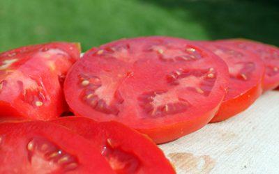 Grow your own beefsteak tomatoes – Part 1: Varieties & materials